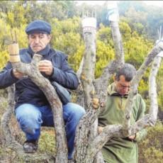 Les analyses sur les pommes anciennes portent leurs fruits